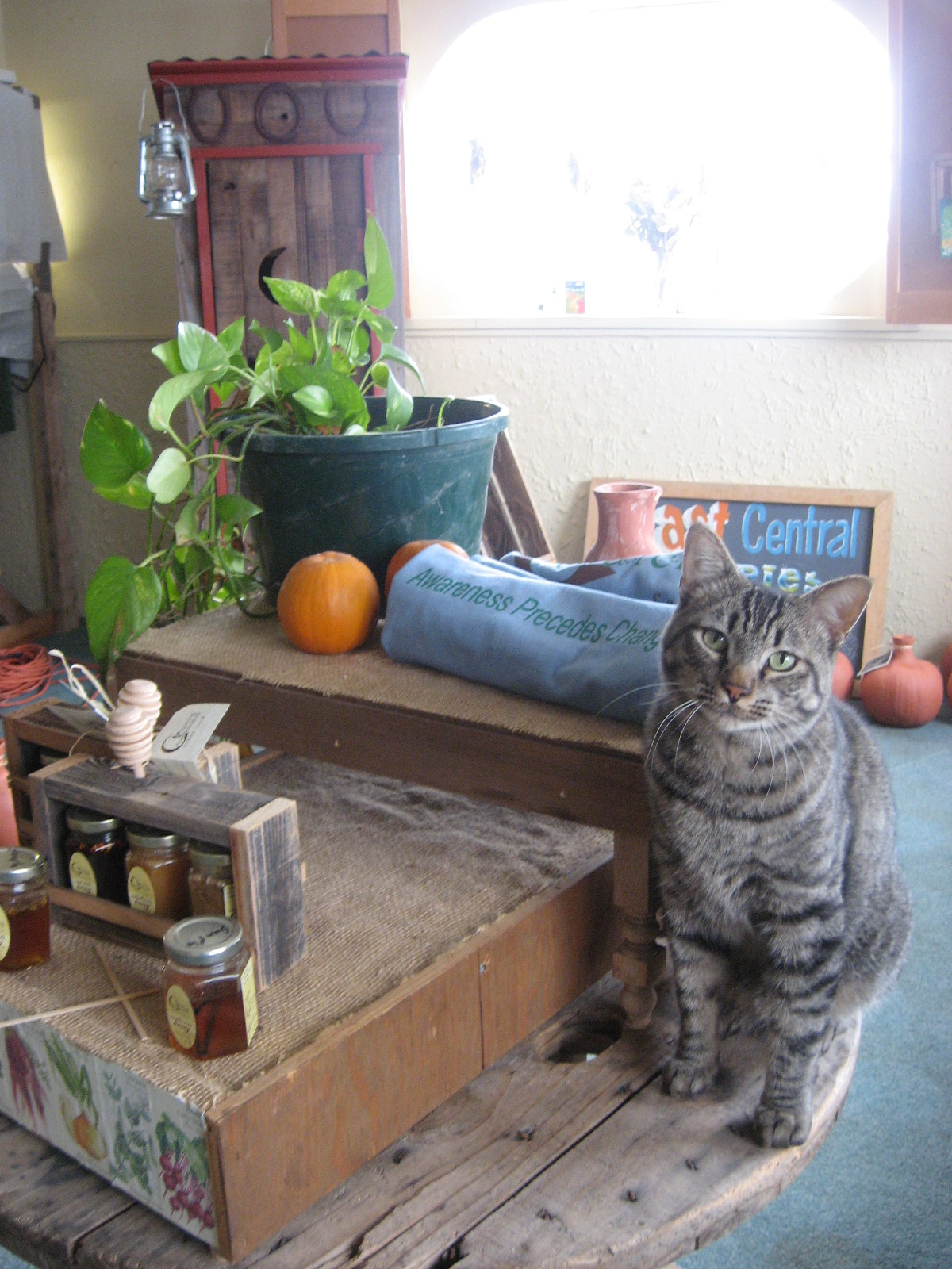 Display sign with products and cat